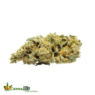 Best dharamshala marijuana cannabisfastexpress