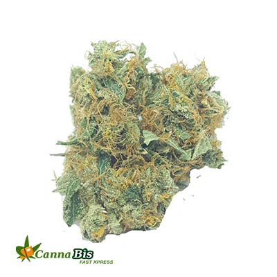 Buy Hindu kush quad in toronto